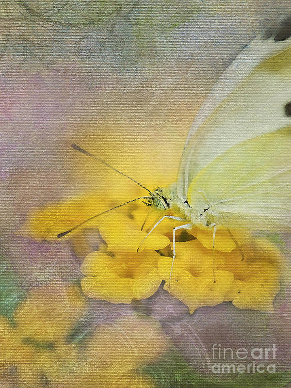 Cabbage White Butterflies Poster featuring the photograph A Touch Of Yellow by Betty LaRue