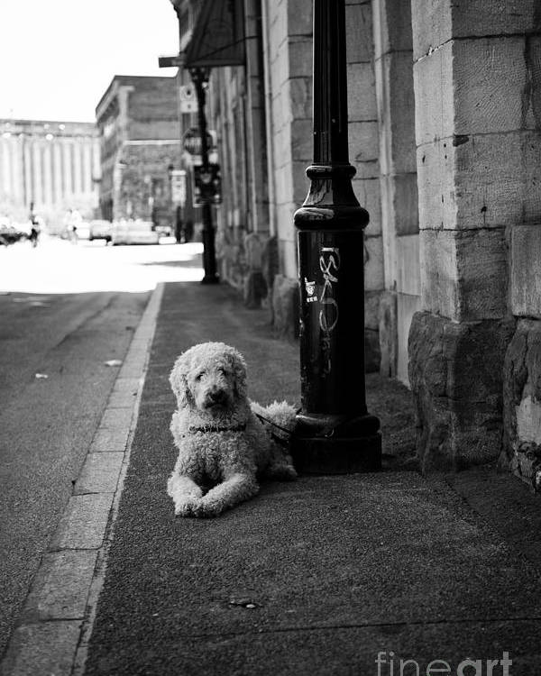Dog Poster featuring the photograph All Alone by Leslie Leda