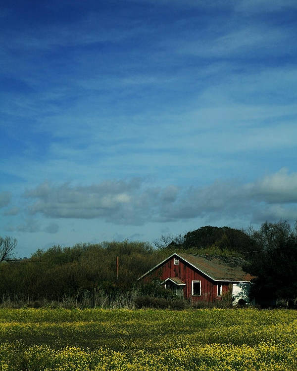 Mustard Poster featuring the photograph All That Yellow by Laurie Search