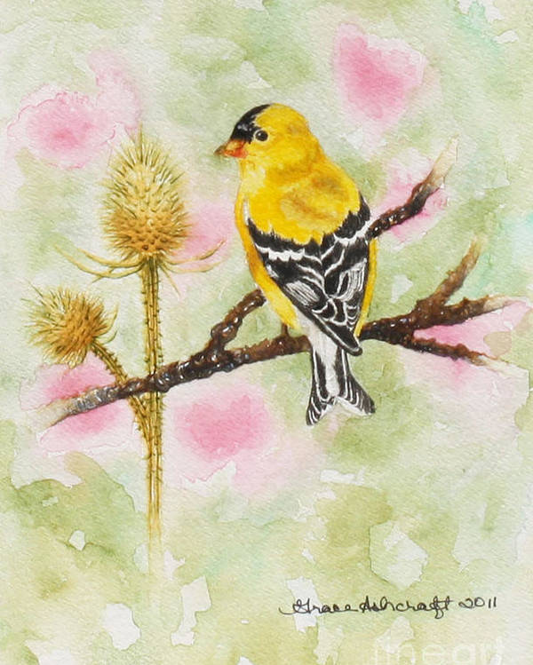 American Poster featuring the painting American Goldfinch by Grace Ashcraft