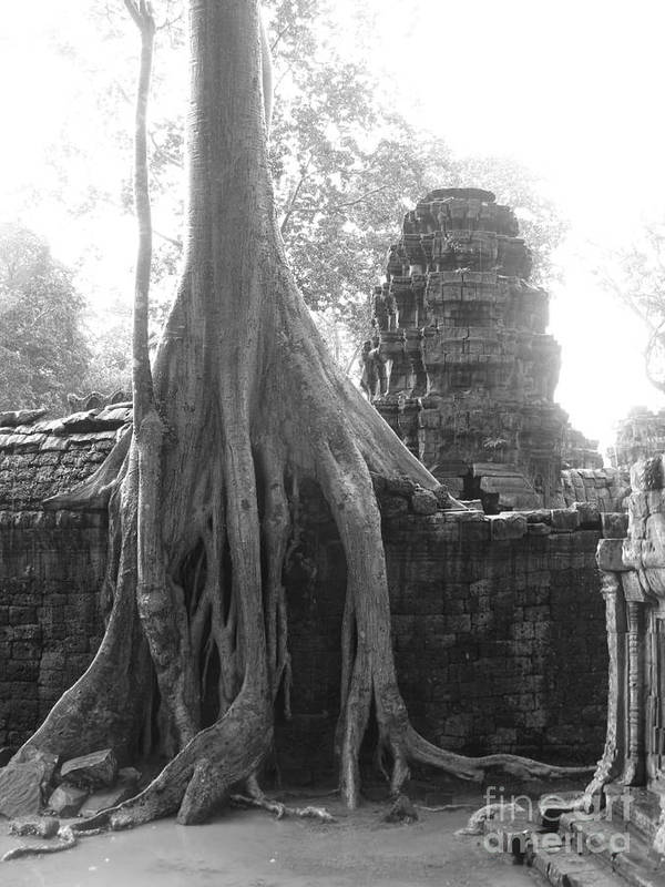 Exotic Asian Print Poster featuring the photograph Ancient Temple With Strangler Fig by Jarrod Brown