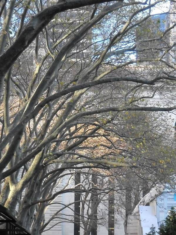 Trees Poster featuring the photograph Arched Trees by Kimberly Perry