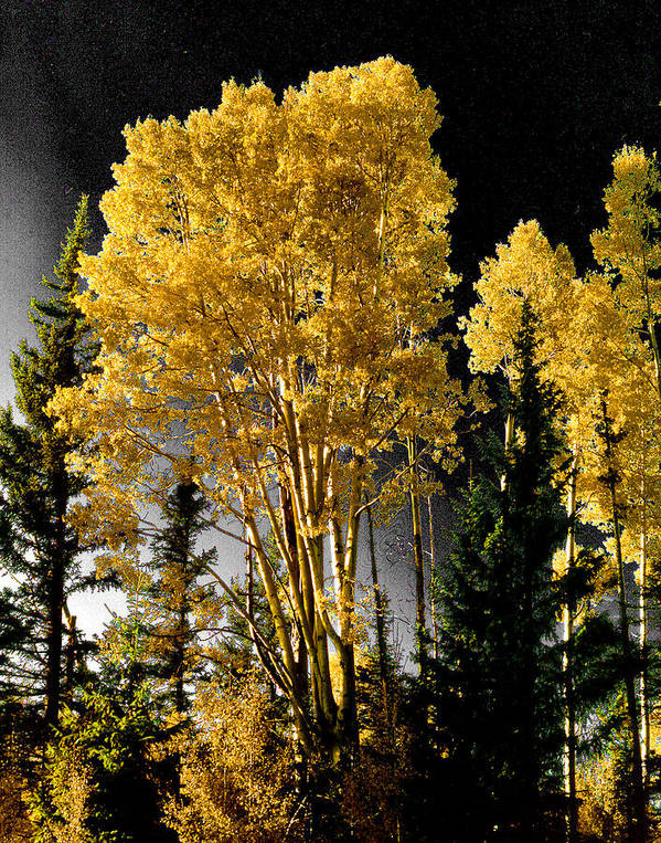 Aspens Poster featuring the photograph Aspens 2 by Jim Painter