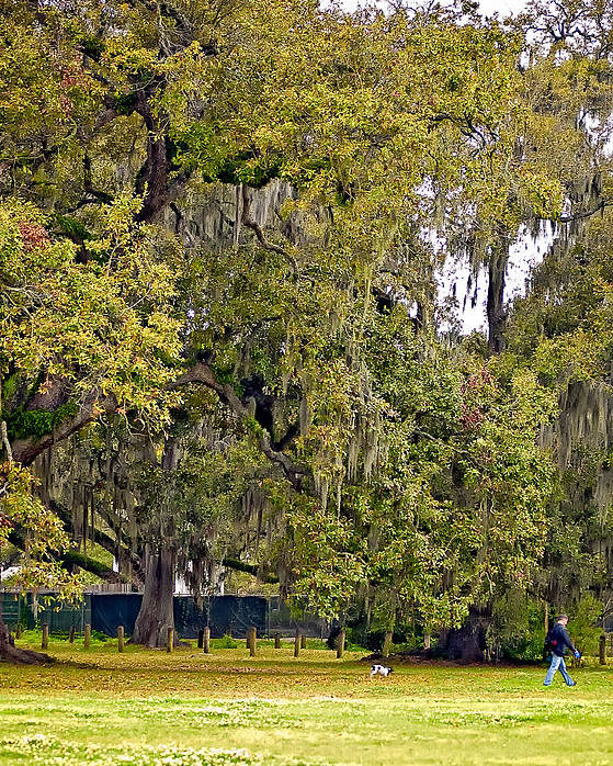 New Orleans Poster featuring the photograph Audubon Park 2 by Steve Harrington