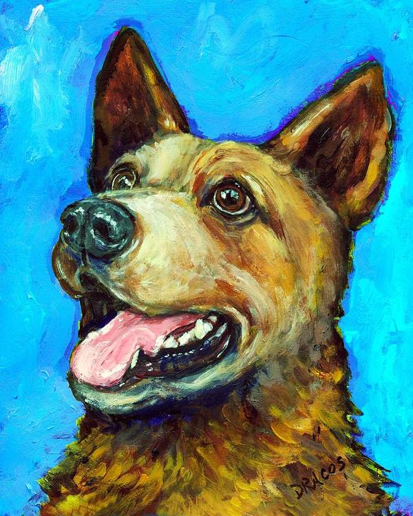 Australian Cattle Dog Poster featuring the painting Australian Cattle Dog  Red Heeler On Blue by Dottie Dracos