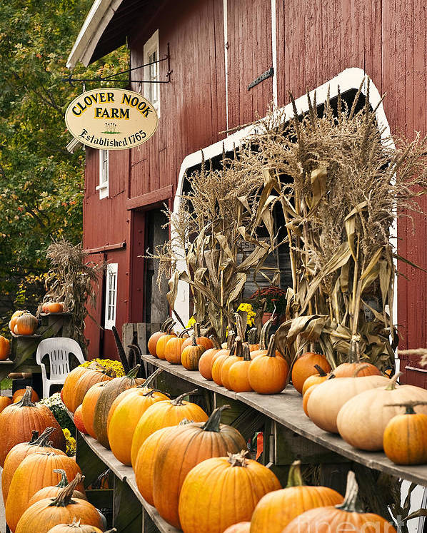 Connecticut Poster featuring the photograph Autumn Farm Stand by John Greim