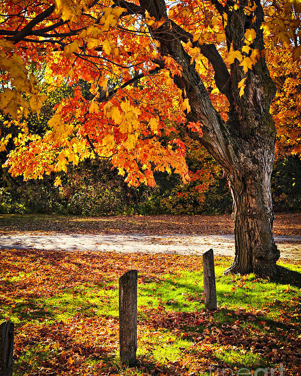 Maple Poster featuring the photograph Autumn Maple Tree Near Road by Elena Elisseeva