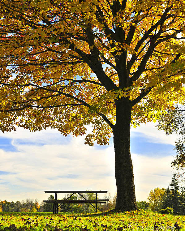 Fall Poster featuring the photograph Autumn Park by Elena Elisseeva