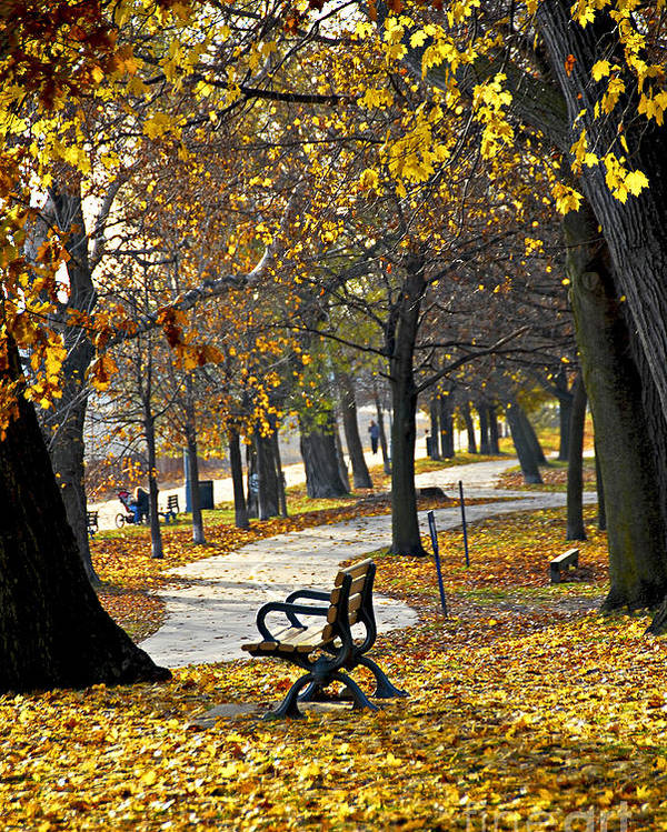 Park Poster featuring the photograph Autumn Park In Toronto by Elena Elisseeva