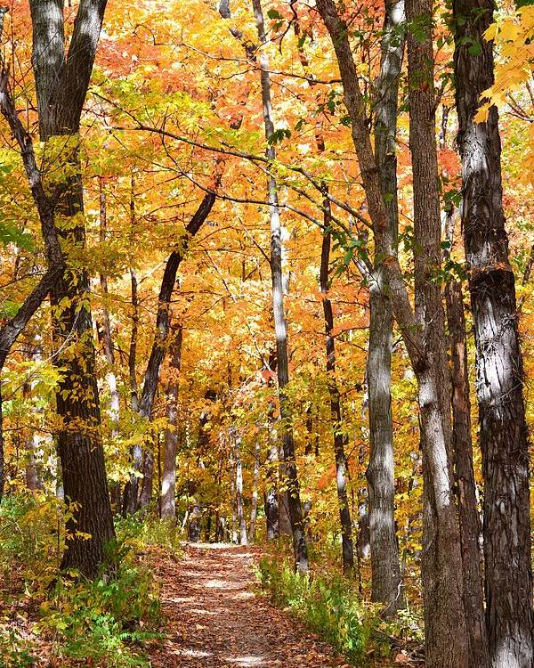 Fall Poster featuring the photograph Autumn Path 2 by Kim Hymes