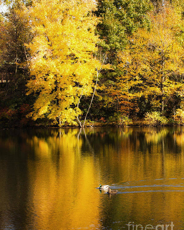 Autumn Poster featuring the photograph Autumn Pond by Leslie Leda