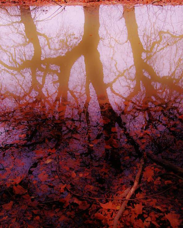Autumn Poster featuring the photograph Autumn Reflections by Xoanxo Cespon