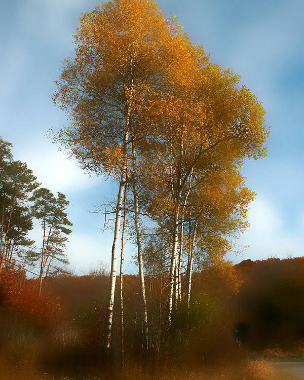 Trees Poster featuring the photograph Autumn Trees by Jim Painter