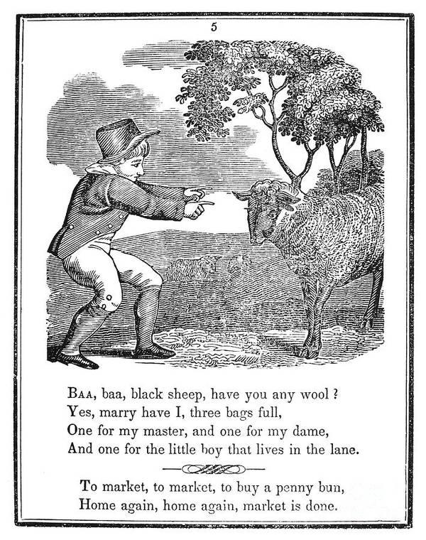 1833 Poster featuring the photograph Baa, Baa, Black Sheep, 1833 by Granger