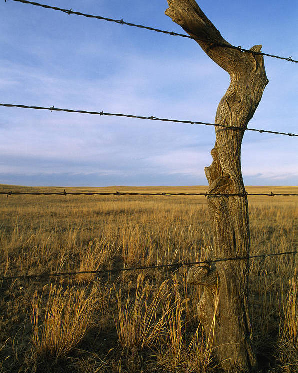 Color Image Poster featuring the photograph Barbed Wire Fence Along Dry Creek Road by Gordon Wiltsie