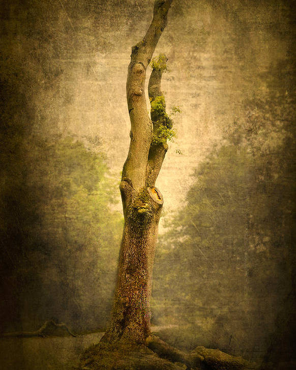 Background Poster featuring the photograph Bare Tree by Svetlana Sewell