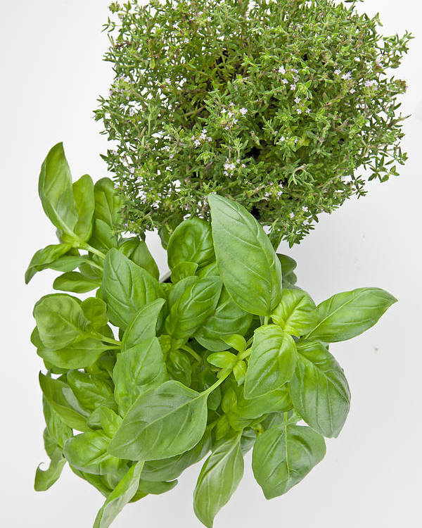 Aromatic Herbs Poster featuring the photograph Basil And Thyme by Joana Kruse