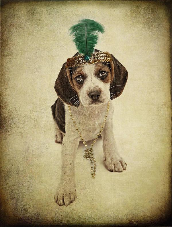 Pet Poster featuring the photograph Beagle Puppy Flapper by Susan Schmitz