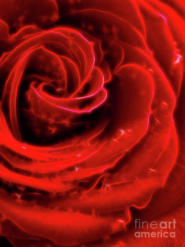 Red Rose Poster featuring the photograph Beautiful Abstract Red Rose by Oleksiy Maksymenko