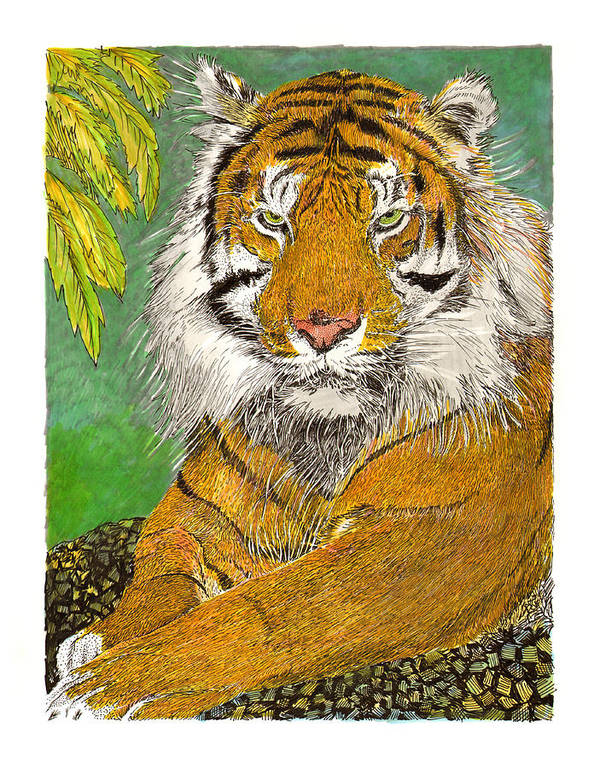 Framed Art Prints Of The Bengal Tiger Poster featuring the painting Bengal Tiger With Green Eyes by Jack Pumphrey