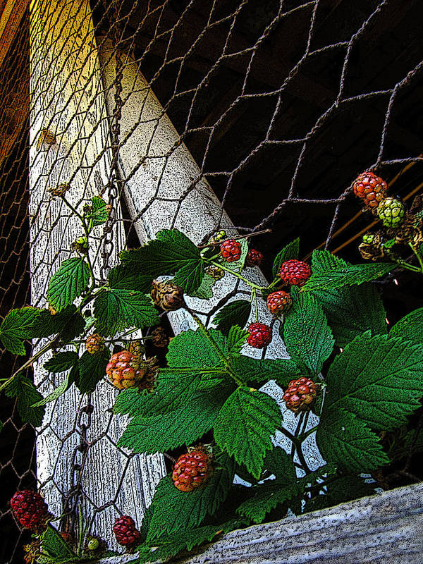 Rocky River Poster featuring the photograph Berries by Jessica Brawley