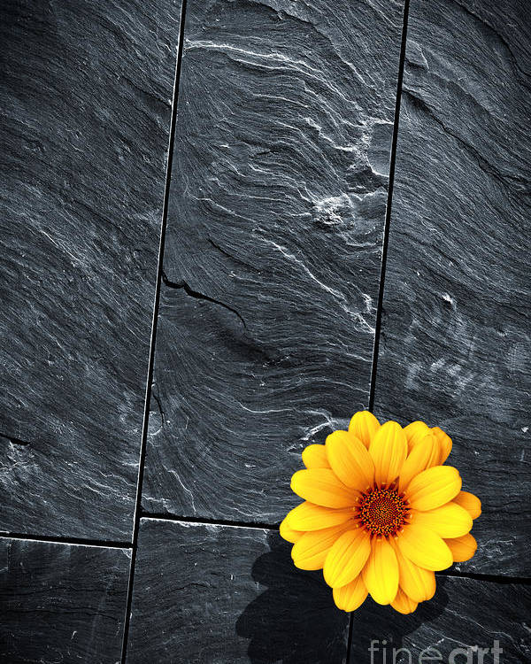 Abstract Poster featuring the photograph Black Schist Flower by Carlos Caetano