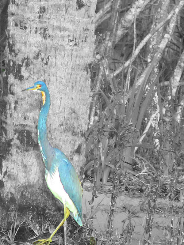Birds Poster featuring the photograph Blue Bird by Vijay Sharon Govender