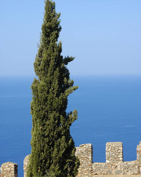 Serene Poster featuring the photograph Blue Ocean And Sky Green Tree - Serene And Calming by Matthias Hauser