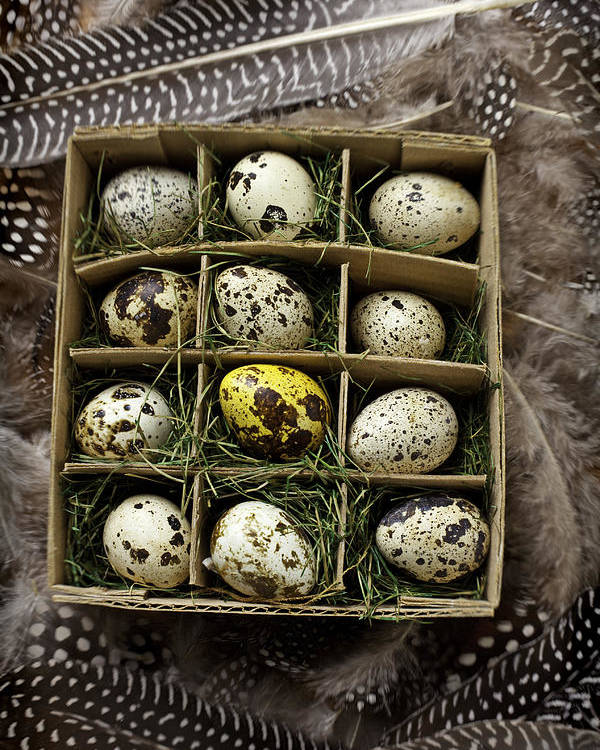 Bird Poster featuring the photograph Box Of Quail Eggs by Garry Gay