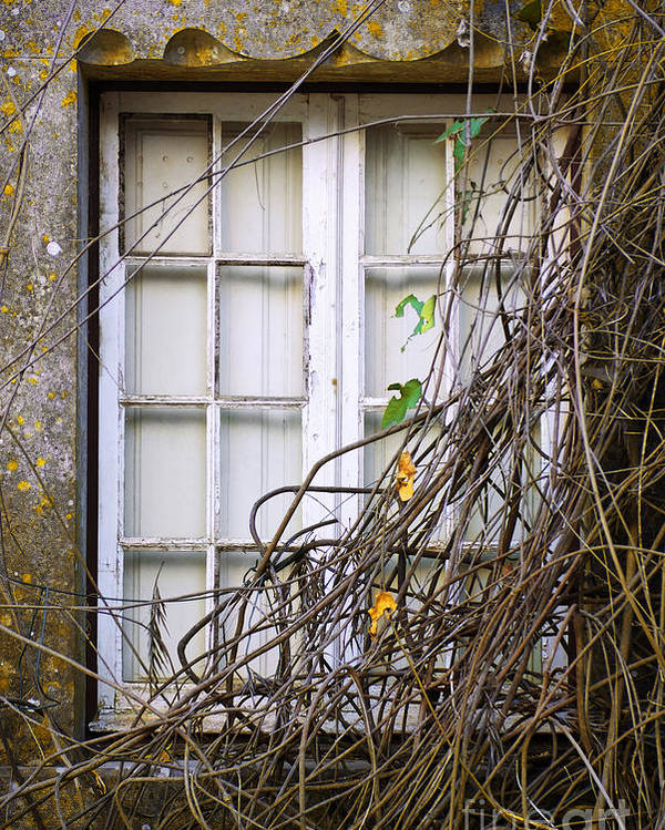Autumn Poster featuring the photograph Branchy Window by Carlos Caetano