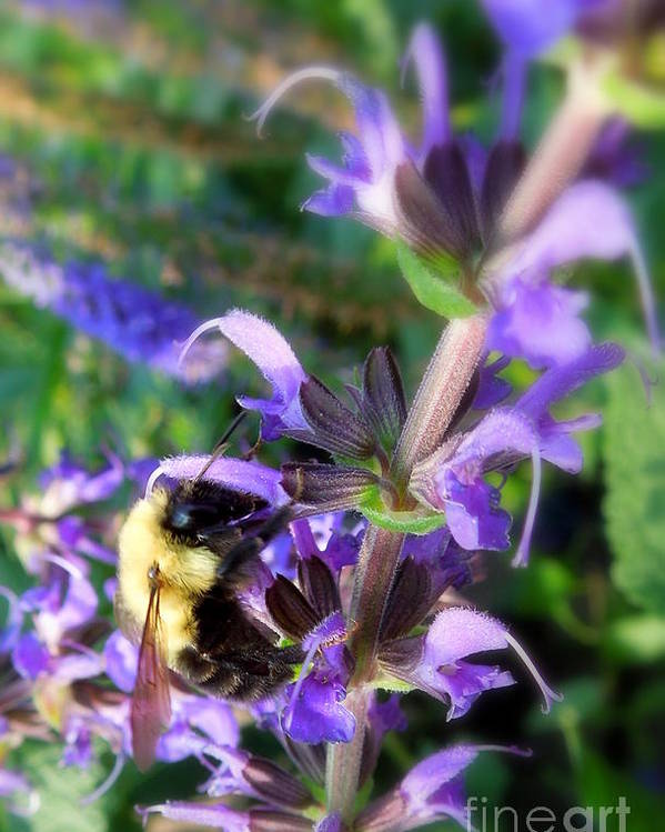 Bumble Poster featuring the photograph Bumble Bee On Flower by Renee Trenholm