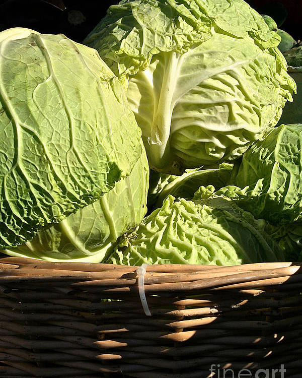 Outdoors Poster featuring the photograph Cabbage Heads by Susan Herber