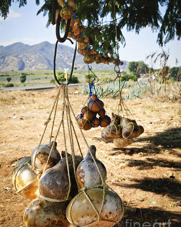 Calabash Poster featuring the photograph Calabash Gourd Bottles In Mexico by Elena Elisseeva