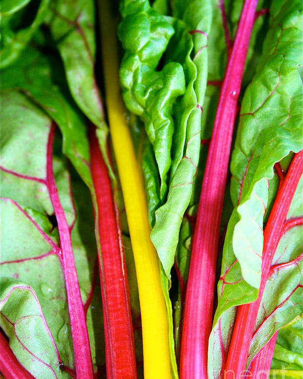 Food Poster featuring the photograph Candy Color Greens by Susan Herber