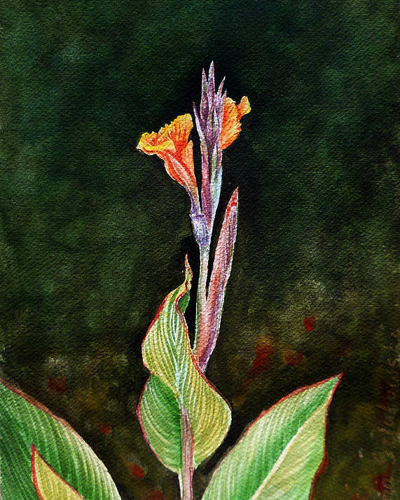 Canna Lily Poster featuring the painting Canna Lily by Irina Sztukowski