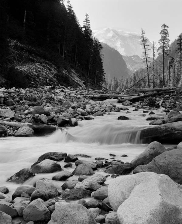 Mount Rainier Poster featuring the photograph Carbon River by Rakesh Malik