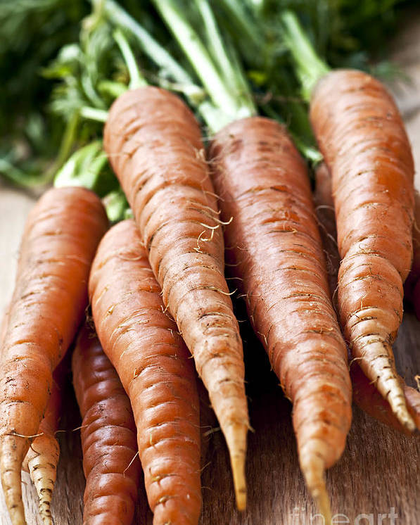 Carrots Poster featuring the photograph Carrots by Elena Elisseeva