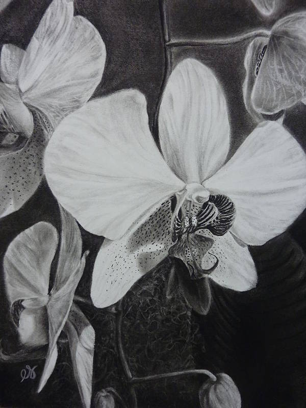 Charcoal Poster featuring the drawing Cascade Of Orchidds by Estephy Sabin Figueroa