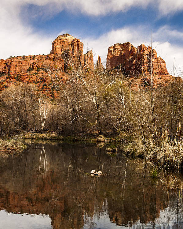 Cathedral Rock Poster featuring the photograph Cathedral Rock Reflections Portrait 1 by Darcy Michaelchuk