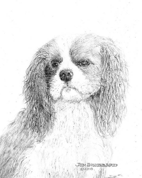 Dog Poster featuring the drawing Cavalier King Charles Spaniel by Jim Hubbard