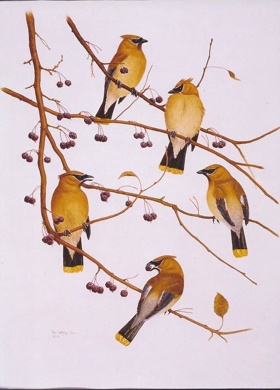 Birds Poster featuring the painting Cedar Waxwing Flock by Bill Gehring