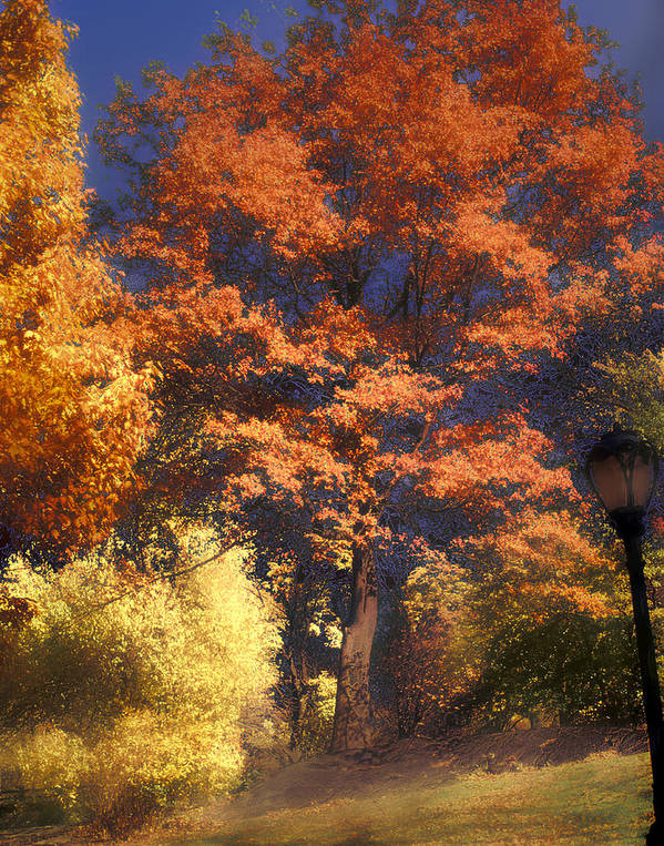 Autumn Poster featuring the photograph Central Park by Jim Painter