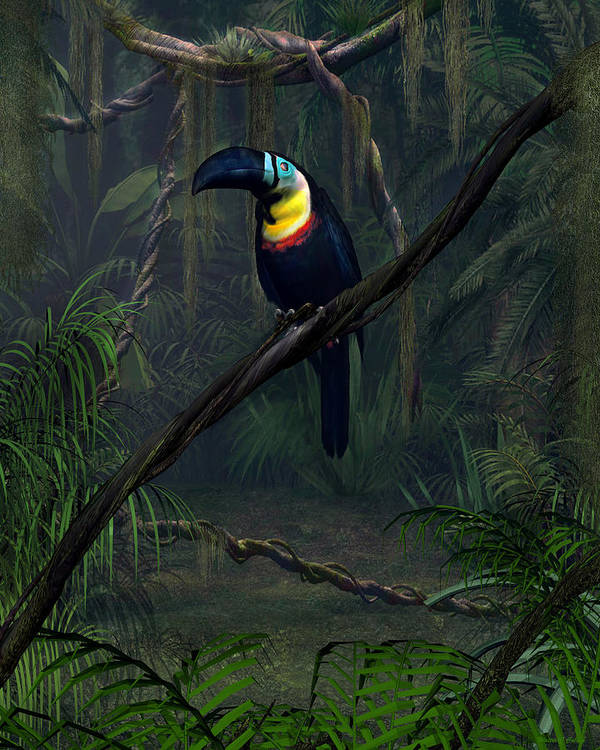 Channel Billed Toucan Poster featuring the digital art Channel Billed Toucan by Walter Colvin