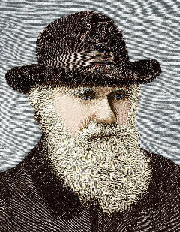Darwin Poster featuring the photograph Charles Darwin, British Naturalist by Sheila Terry