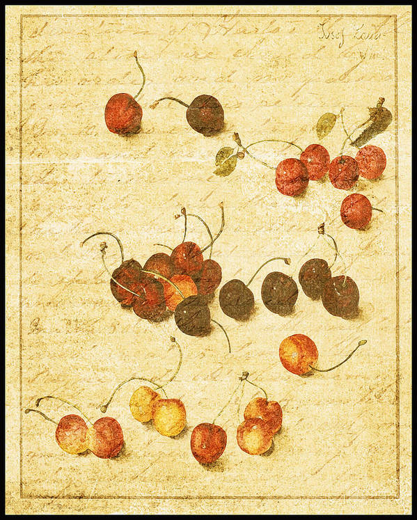 Vintage Botanical Poster featuring the photograph Cherries by Bonnie Bruno