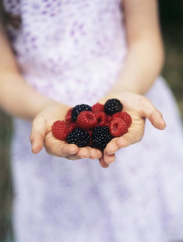 Fruit Poster featuring the photograph Child Holding Berries by Ian Boddy