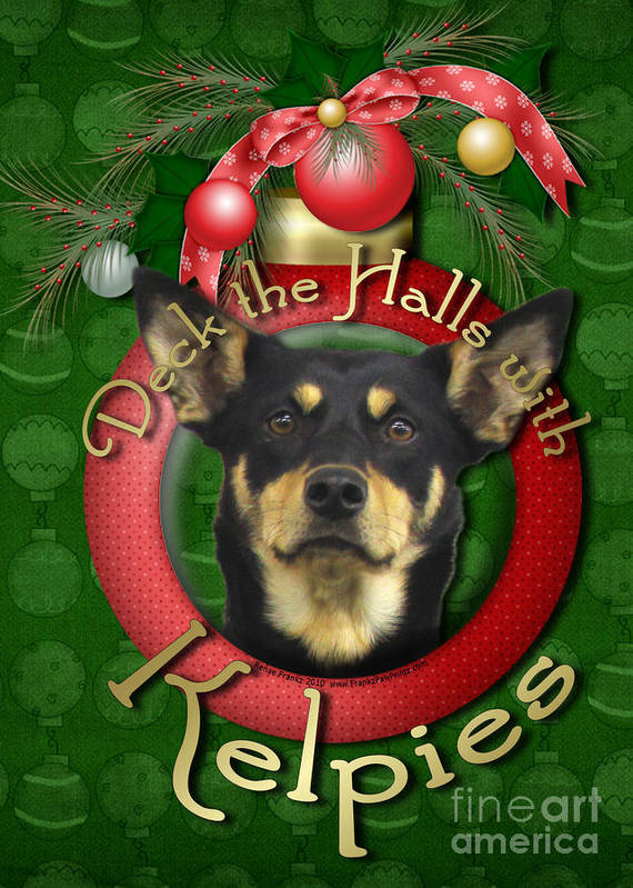 Australian Kelpie Poster featuring the digital art Christmas - Deck The Halls With Kelpies by Renae Laughner