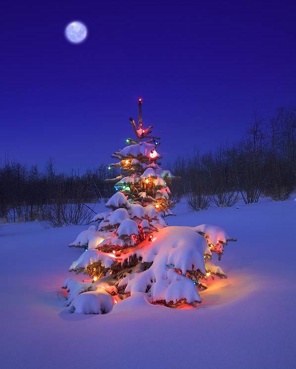 Christmas Decoration Poster featuring the photograph Christmas Tree Glowing by Carson Ganci