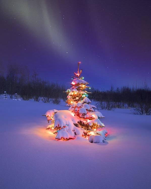 Christmas Poster featuring the photograph Christmas Tree Glowing Under The by Carson Ganci