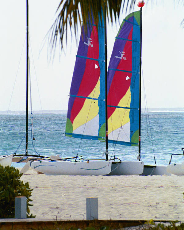 Sailboats Poster featuring the photograph Color On The Seas by Carol Steele